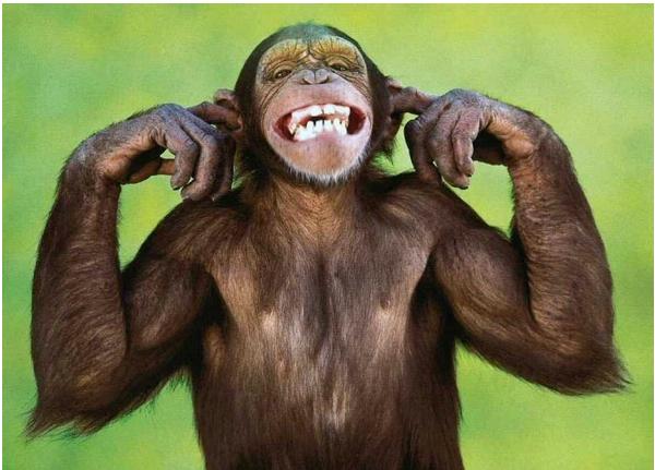 monkey ears